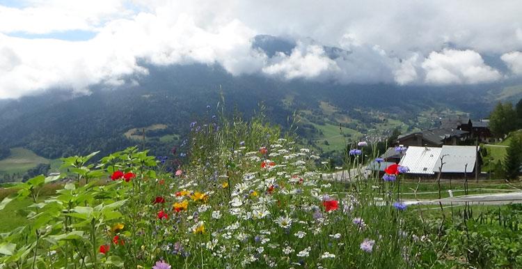 Jardin alpin et stages musicaux dont piano, à Doucy les meurs, Tarantaise, Savoie